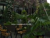 giàn hoa gỗ sân thượng
